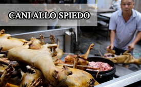 Cani allo spiedo - Skewered dogs