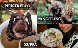 Zuppe di Pipistrelli o di Pangolini